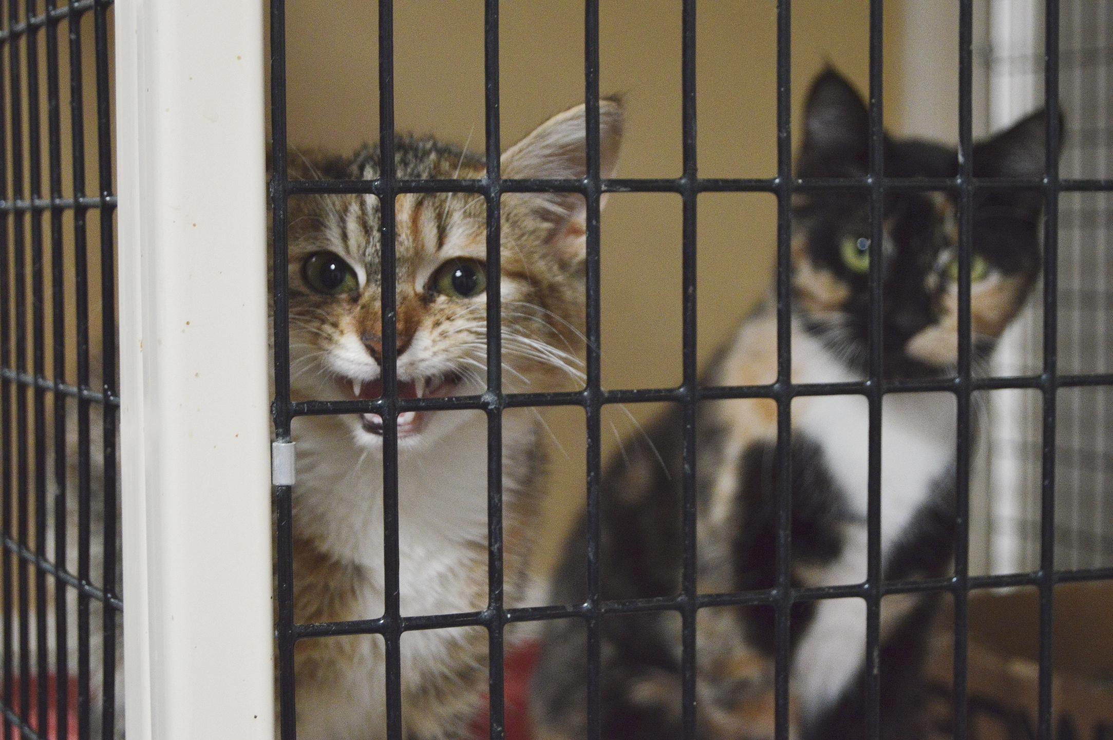 County seeks Humane Society's help with animal control